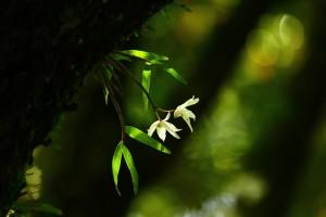 霧島 春の香り