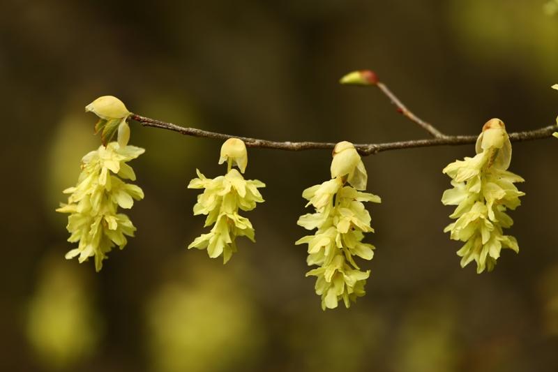 花は霧島・花めぐり(4月27日えびの高原・えびの岳)