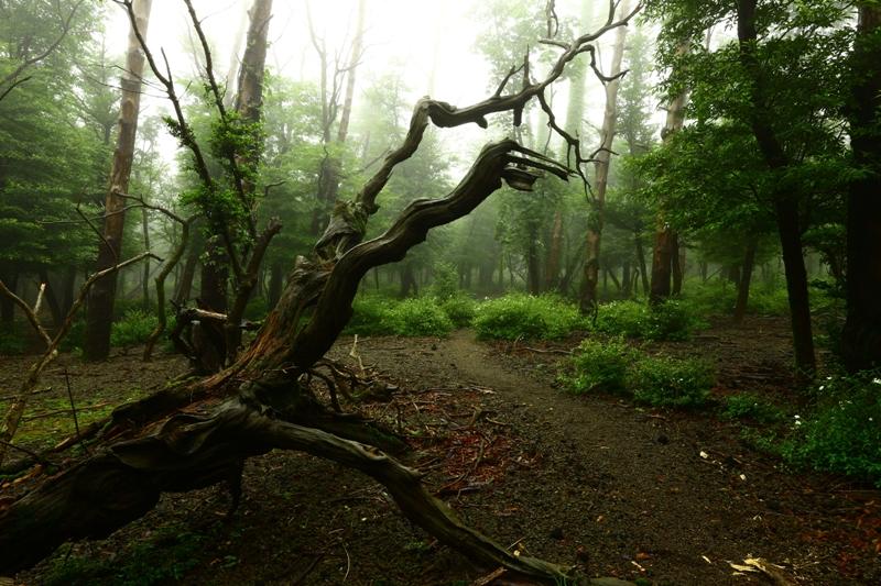 霧島の静かな森