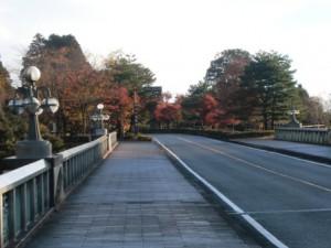 霧島神宮参道の紅葉が見頃に。