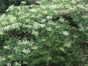 霧島を彩る花々