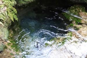 神秘的な湧き水