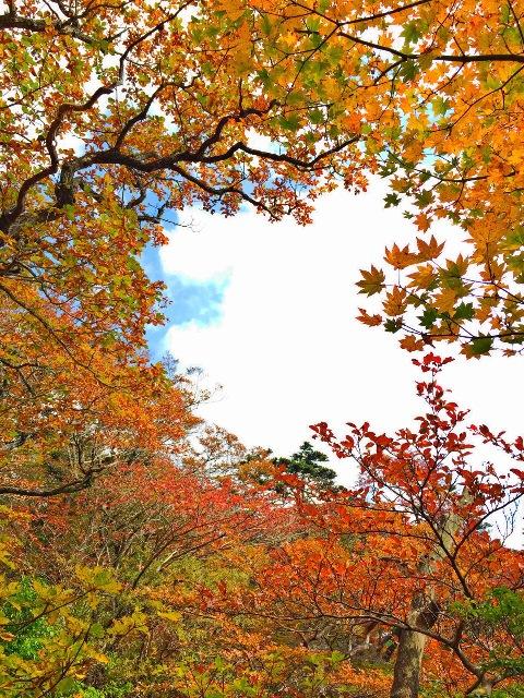大浪池の紅葉2014.10.25撮影