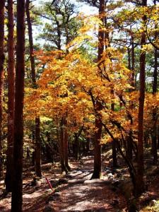 えびの高原池めぐりコースの紅葉状況2015.10.21