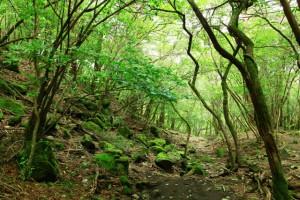 えびの高原~甑岳(こしきだけ)2014.8.13