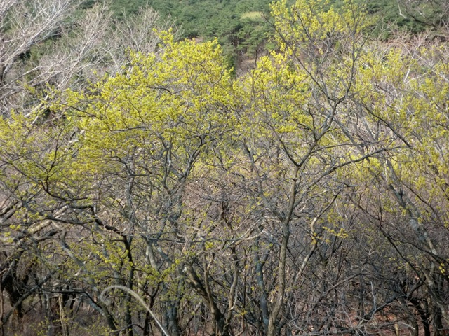中岳中腹探勝路モミジコースと県道104号線