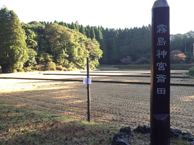 霧島神宮斎田の稲刈りが行われました