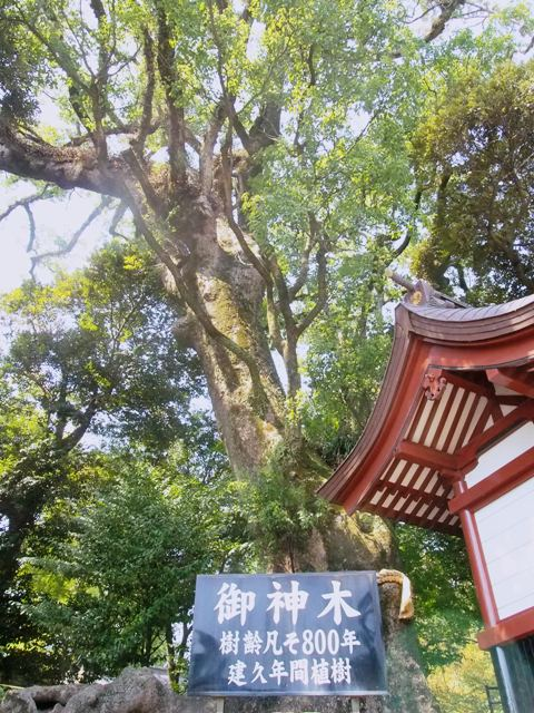 鹿児島神宮周辺の歴史散策