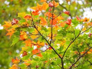 えびの高原の紅葉2013.10.18