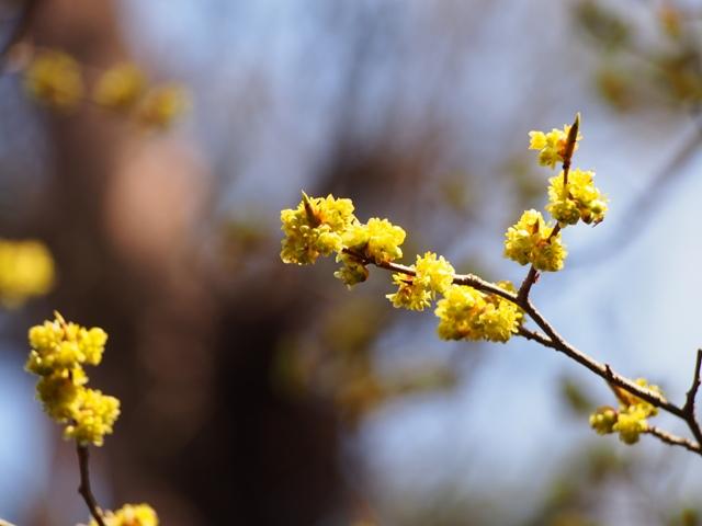 えびの高原の春