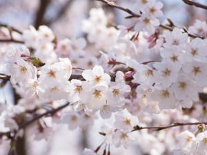 春真っ盛り?