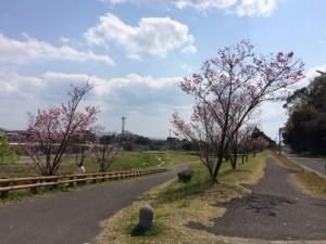 春のお散歩