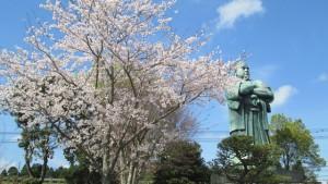 桜の土曜日です✿