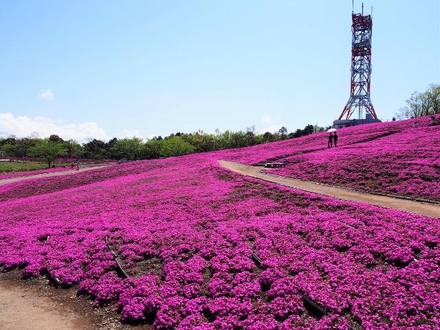 ピンクの絨毯♡