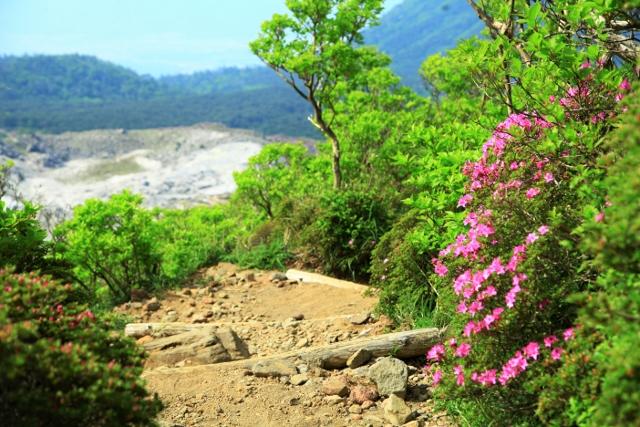 韓国岳とミヤマキリシマ 5月22日