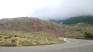 えびの高原のミヤマキリシマ 5月26日