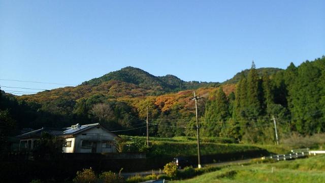 横川けやきの森の紅葉状況 2016.11.12