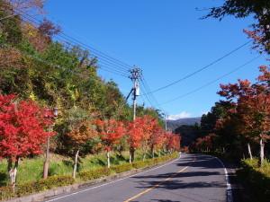 丸尾周辺・新湯周辺の紅葉がきれいです!