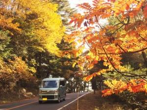 県道1号(牧園えびの高原線)~新湯付近の紅葉状況 2016.11.15