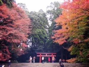 霧島神宮の紅葉状況 2016.12.1