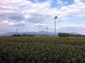 茶畑と霧島連山