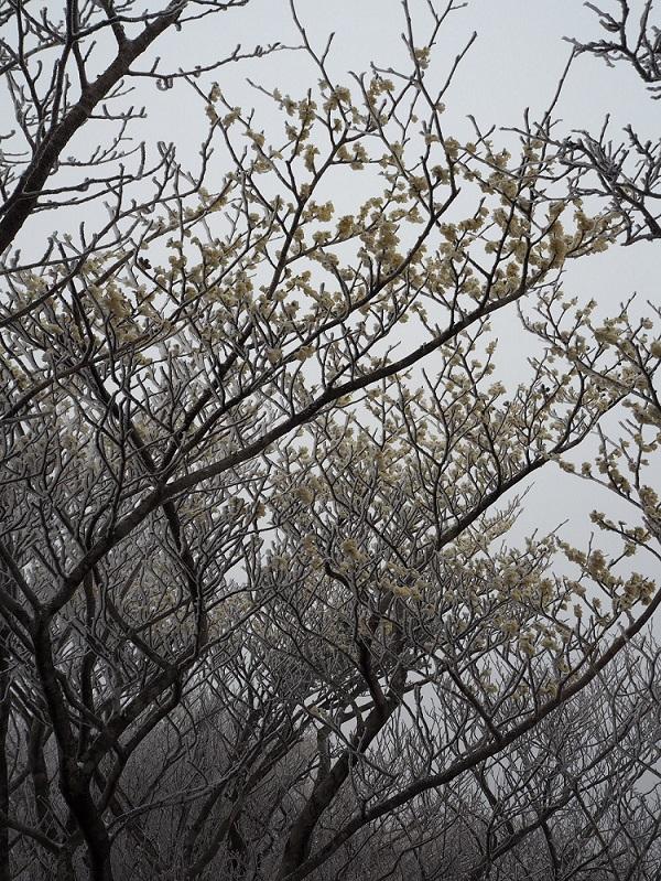 春が待ち遠しいです