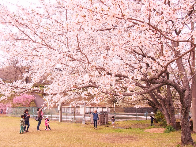 桜はまだか~?