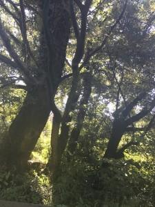 木漏れ日を愛でる日々