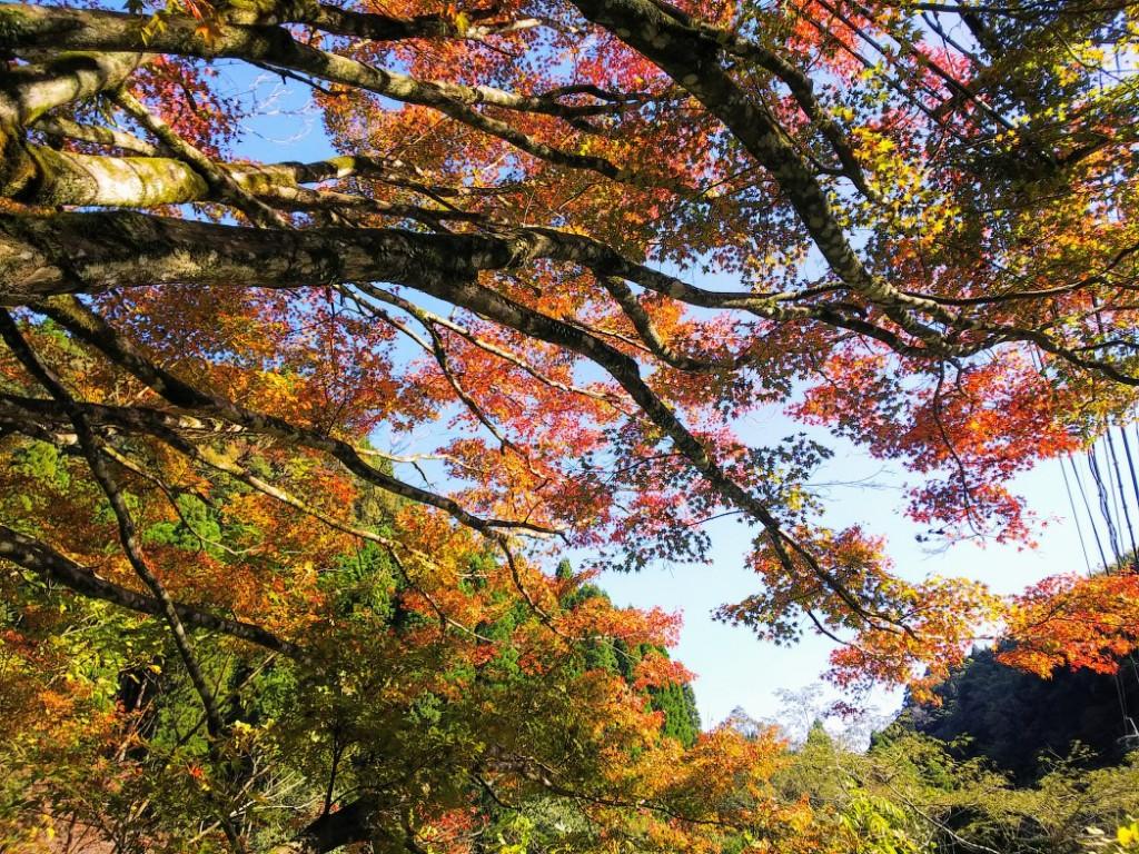 新川渓谷遊歩道の紅葉