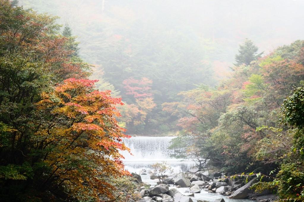 紅葉状況(県道104号線霧島公園小林線)2017.11.2