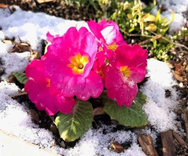 ❅雪化粧❅