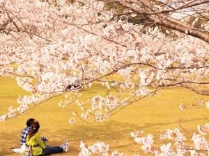 春分の日ですね☆