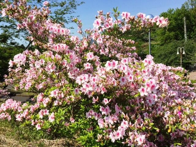✿春らんまん✿