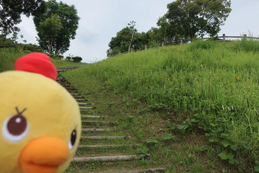 お散歩コースに(*'▽')