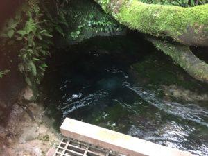 大出水の湧き水を味わう