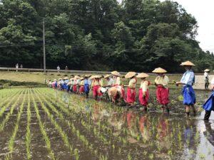 今年も御田植祭が行われました