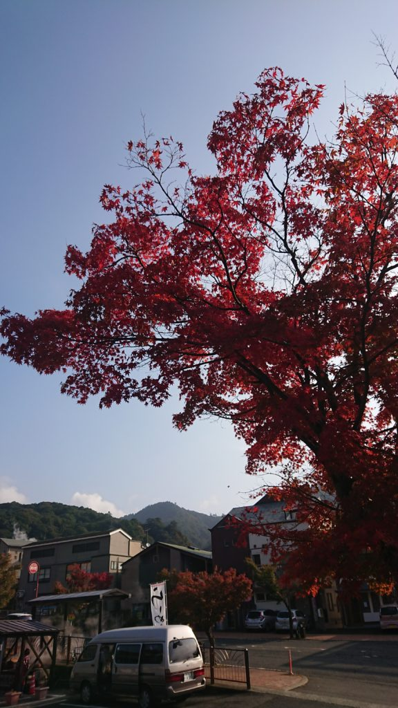 秋の紅葉情報(霧島温泉市場)
