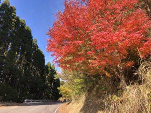 霧島の紅葉情報(県道480号~104号)
