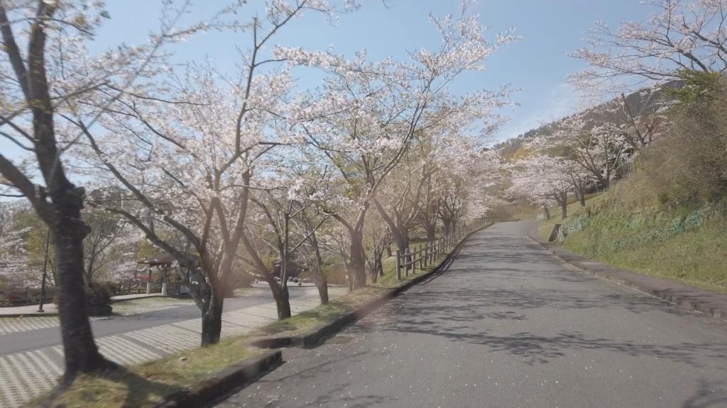 KIRISHIMA SAKURA TOUR