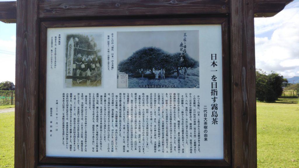 大茶樹公園🍵