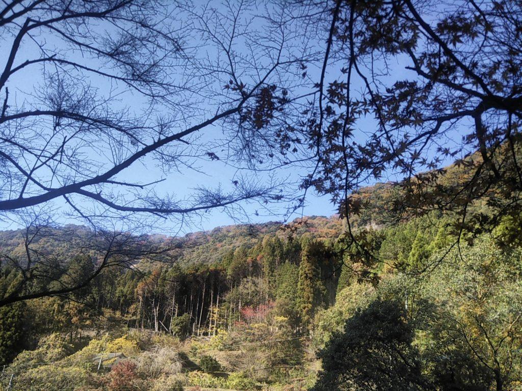台明寺渓谷公園🍁