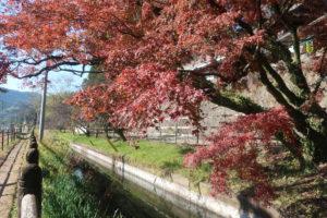 紅葉情報🍁鹿児島神宮