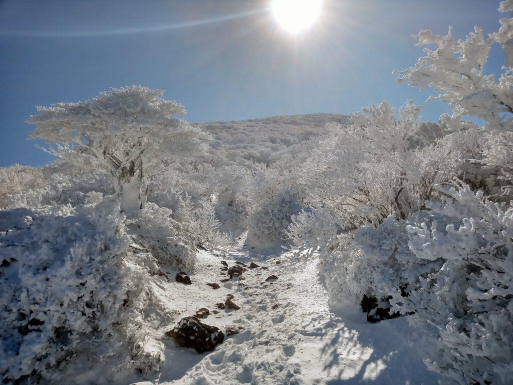 久々の雪景色