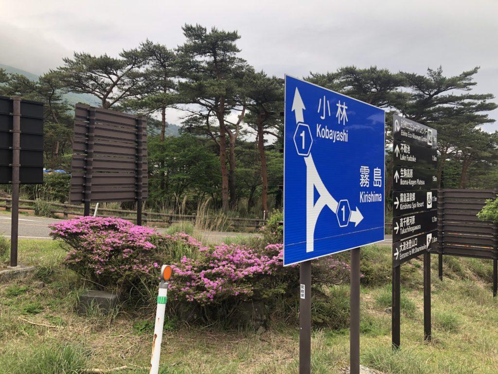 ミヤマキリシマ開花状況(えびの高原)②